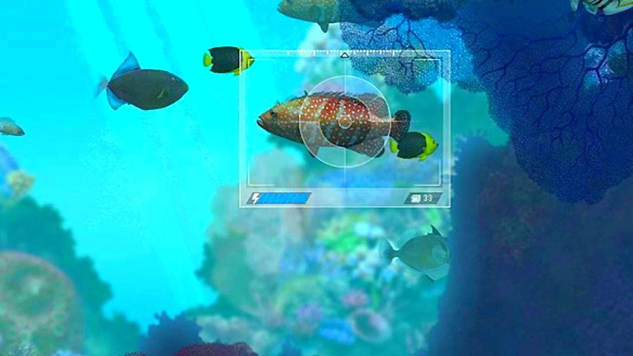 CaribbeanSeaFishes_SS_03.jpg