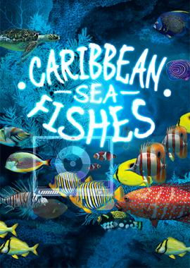 CaribbeanSeaFishes_BI.jpg