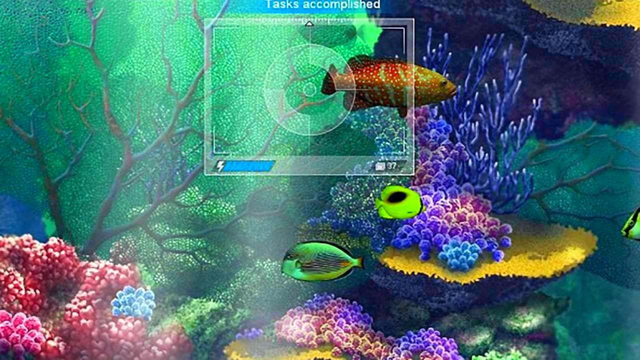 CaribbeanSeaFishes_SS_01.jpg