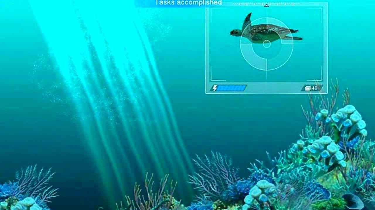 CaribbeanSeaFishes_SS_04.jpg